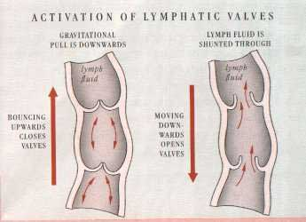 Lymphatic vessels are activiated simultaneously through your whole body rebounding on mini trampolines in the verticle plane
